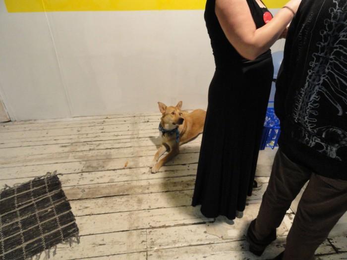 Studio doggy!